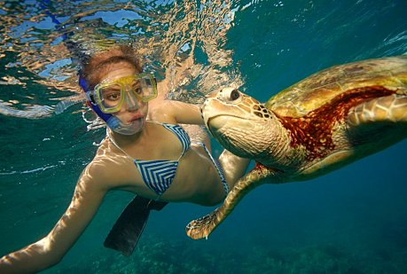 Snorkelling with a Turtle at Moore reef near Cairns